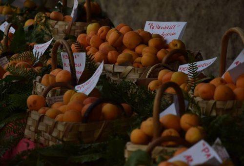 Incontro pubblico verso la costituzione del Presidio Slow Food dell'Albicocca del Vesuvio