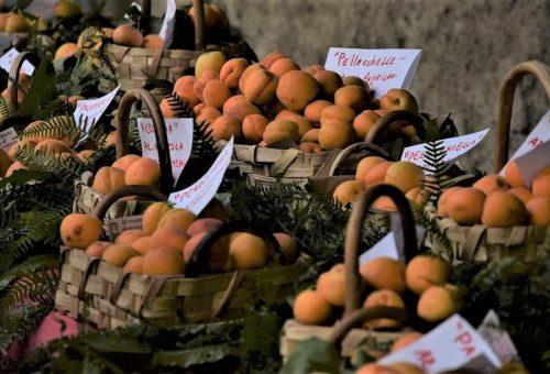 Nasce il Presidio Slow Food dell'Albicocca del Vesuvio