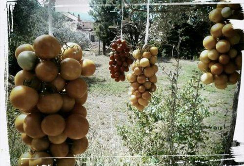 Fresco Mergellina sostiene il percorso per la creazione di un nuovo Presidio Slow Food