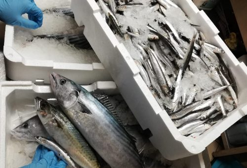 20 ristoranti, 3 province, 4 capoluoghi: oggi e domani c'è BlueFish 19