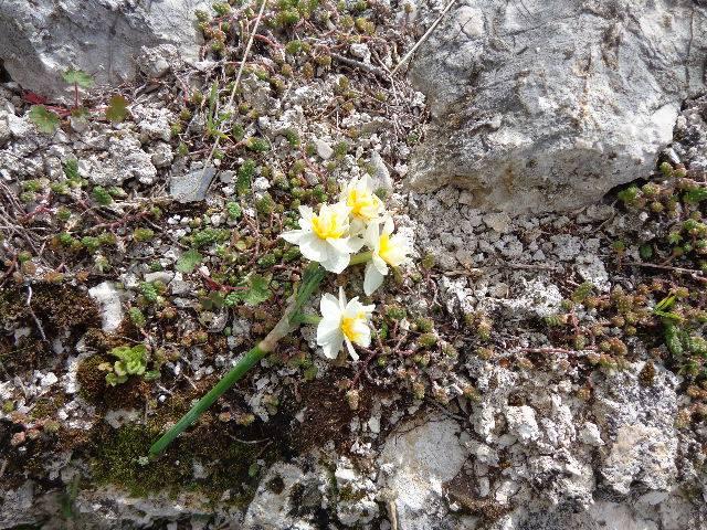 I fiori della Candelora