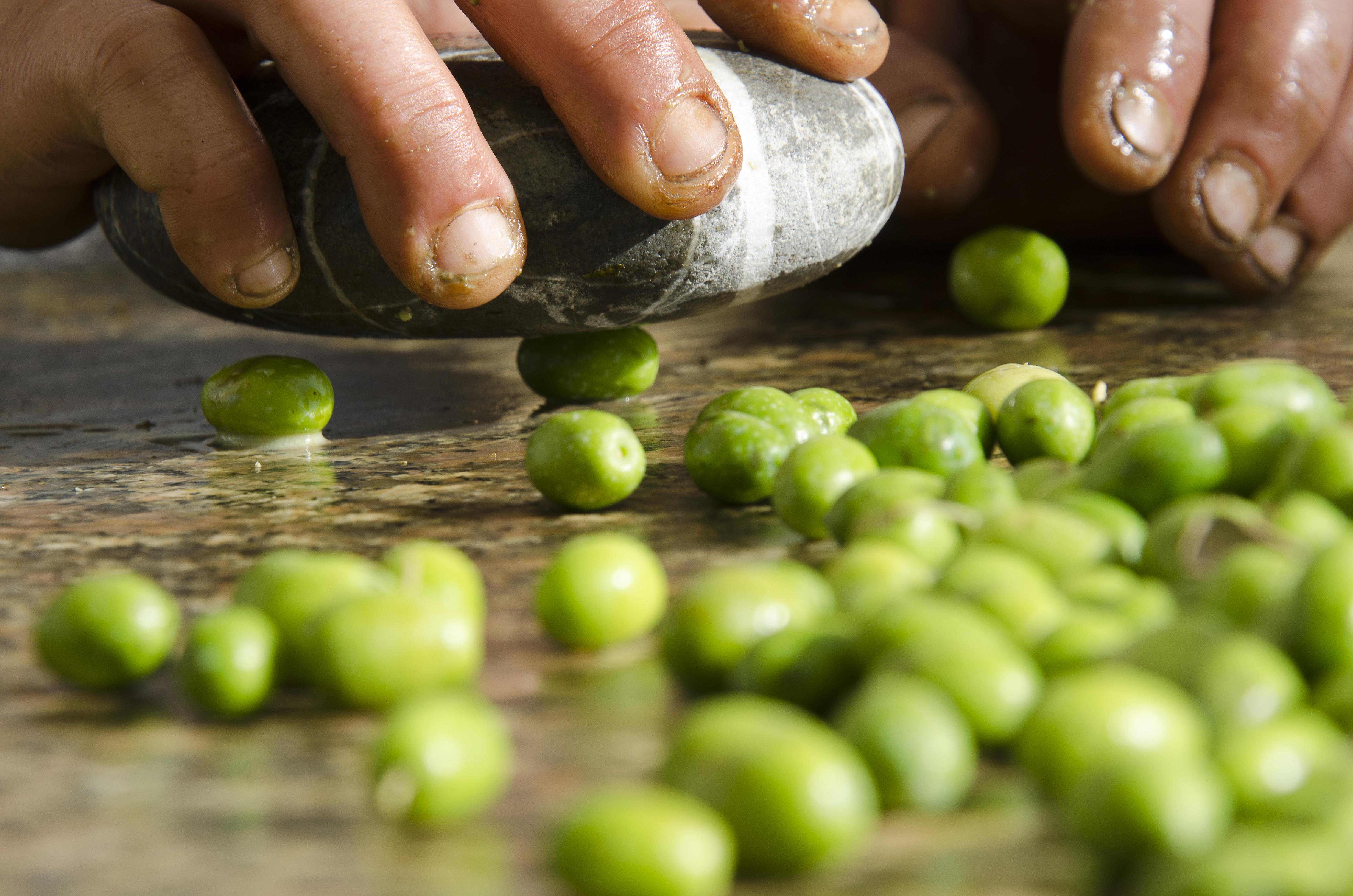Resa in olio delle olive in frantoio. – Accademia dei ...