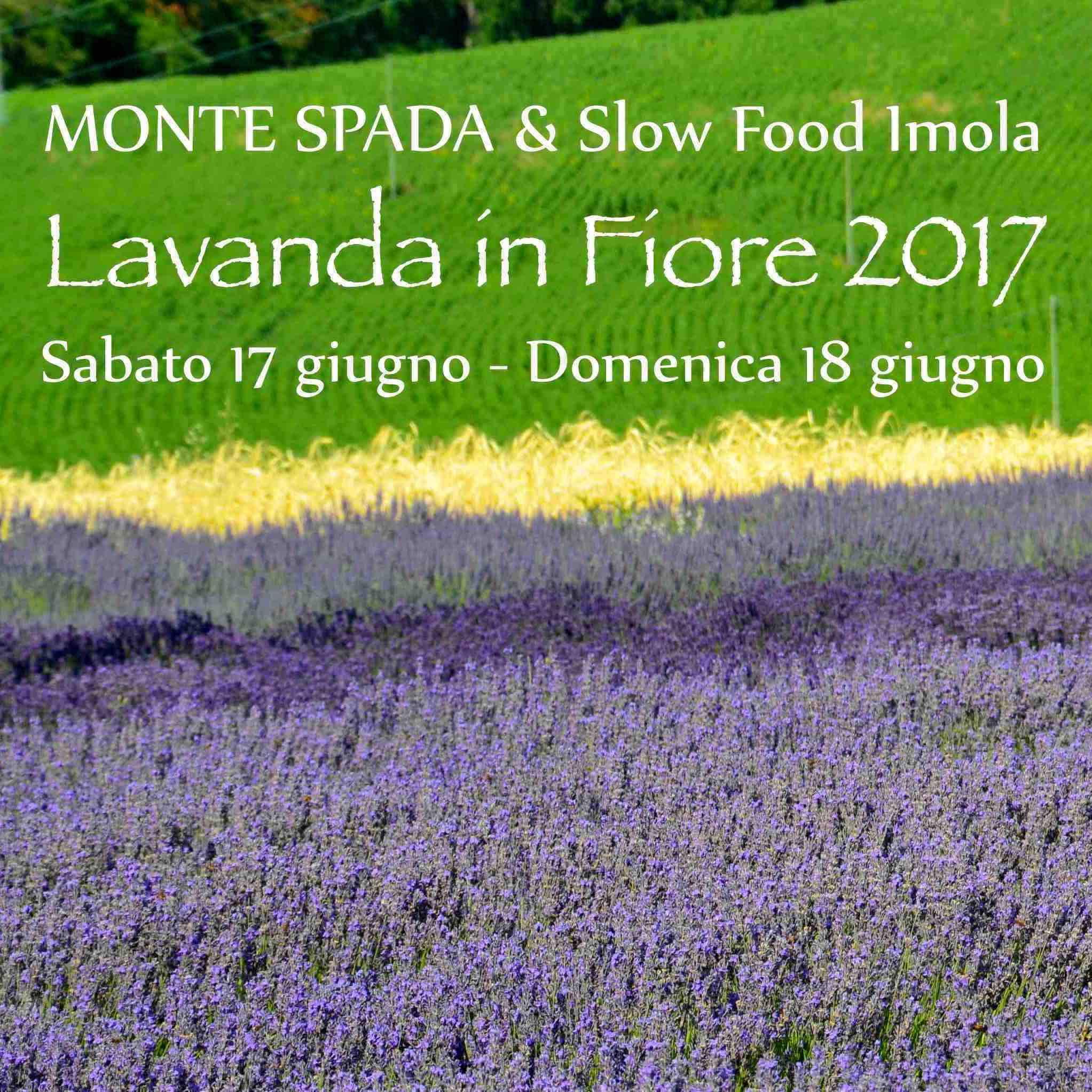 Slow Food Imola: lavanda in fiore