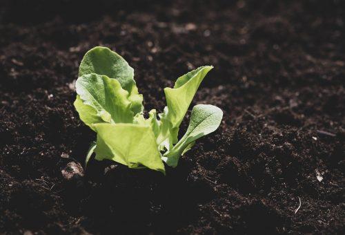 Covid-19: consentire l'accesso agli orti domestici e di comunità, bene essenziale per il fabbisogno alimentare di tantissime persone