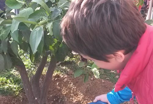 Coltivare un sogno: la scuola che piantava gli alberi-Quiliano (SV)