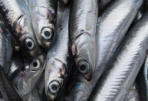 Ricordando Slow Fish con  variazioni di azzurre…ops acciuga..