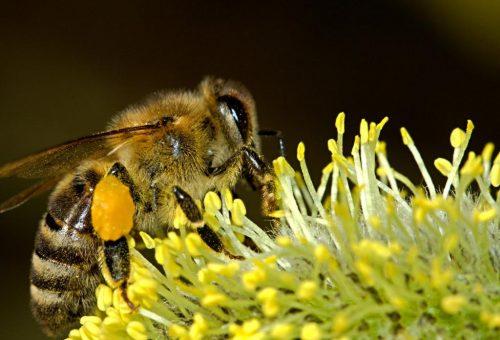 20 maggio – Giornata mondiale delle api: Slow Food lancia la campagna Slow Bees