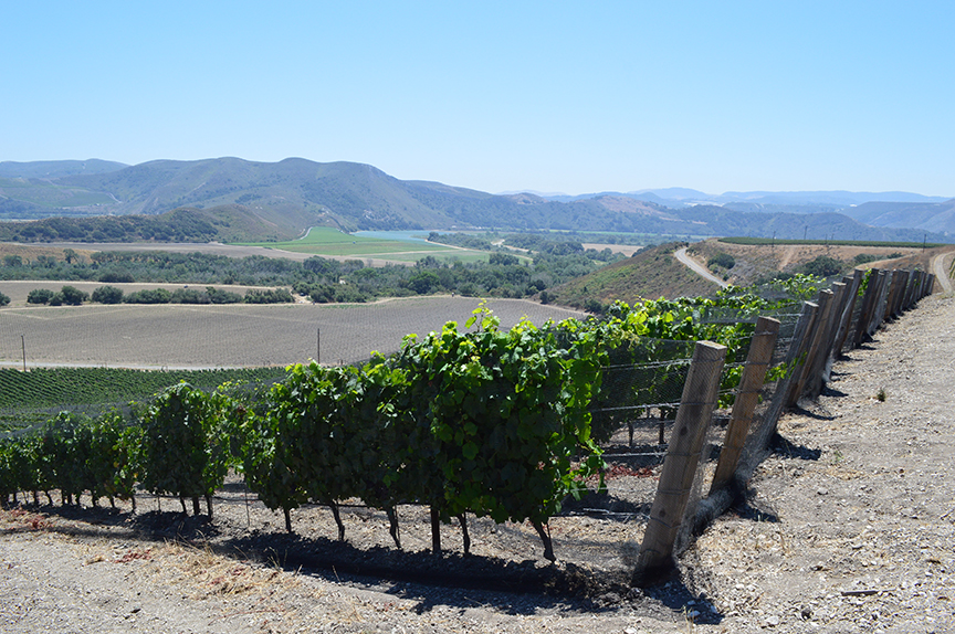 Slowine California