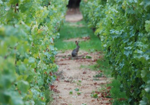 LAUREL GLEN VINEYARD