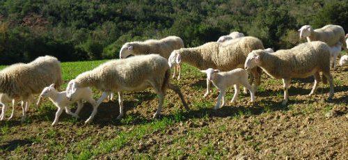 Slow Food Italia e Regione Toscana: insieme per recuperare le filiere locali