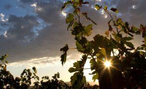 Una domenica in fattoria Slow food Toscana e Tenute Nardi