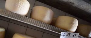 presidio slow food pecorino della montagna pistoiese