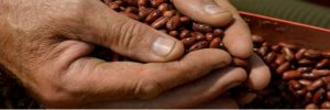 fagiolo rosso di lucca - foto r.giomi