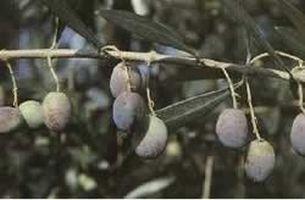 Slow Food  Terre medicee e apuane