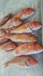 Mercato di Procchio - pesci
