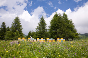 Miele senza residui? Cercatelo in montagna