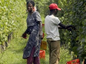 Il paradosso dell'industria alimentare globale che spinge all'emigrazione