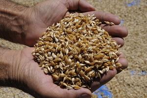 Semina il cambiamento: sostieni l'agricoltura contadina che salva il pianeta
