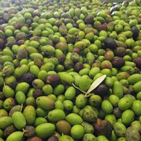 Piano europeo di rilancio dell'olio d'oliva: nuove norme per bar e ristoranti?