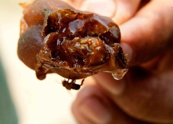 Il buon miele delle api indigene