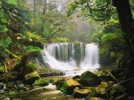 Buone notizie: il Perù si prende cura del polmone del pianeta