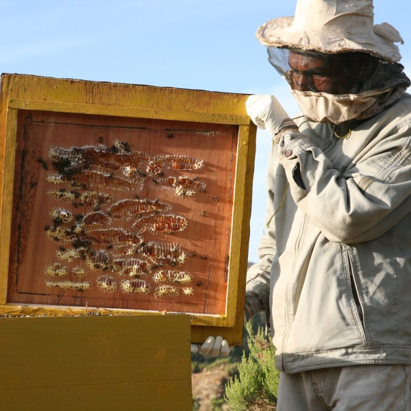 Cosa significa un barattolo di miele? Il tuo 5 x mille può fare la differenza