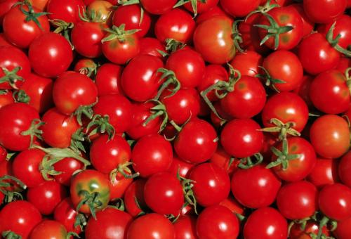 Ti porto nell'orto, i pomodori