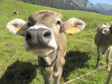 Quando la carne fa bene al clima