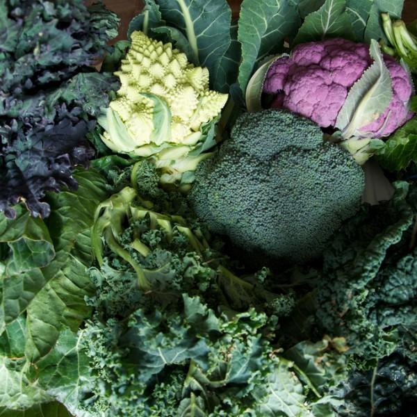 Tutte le facce del broccolo