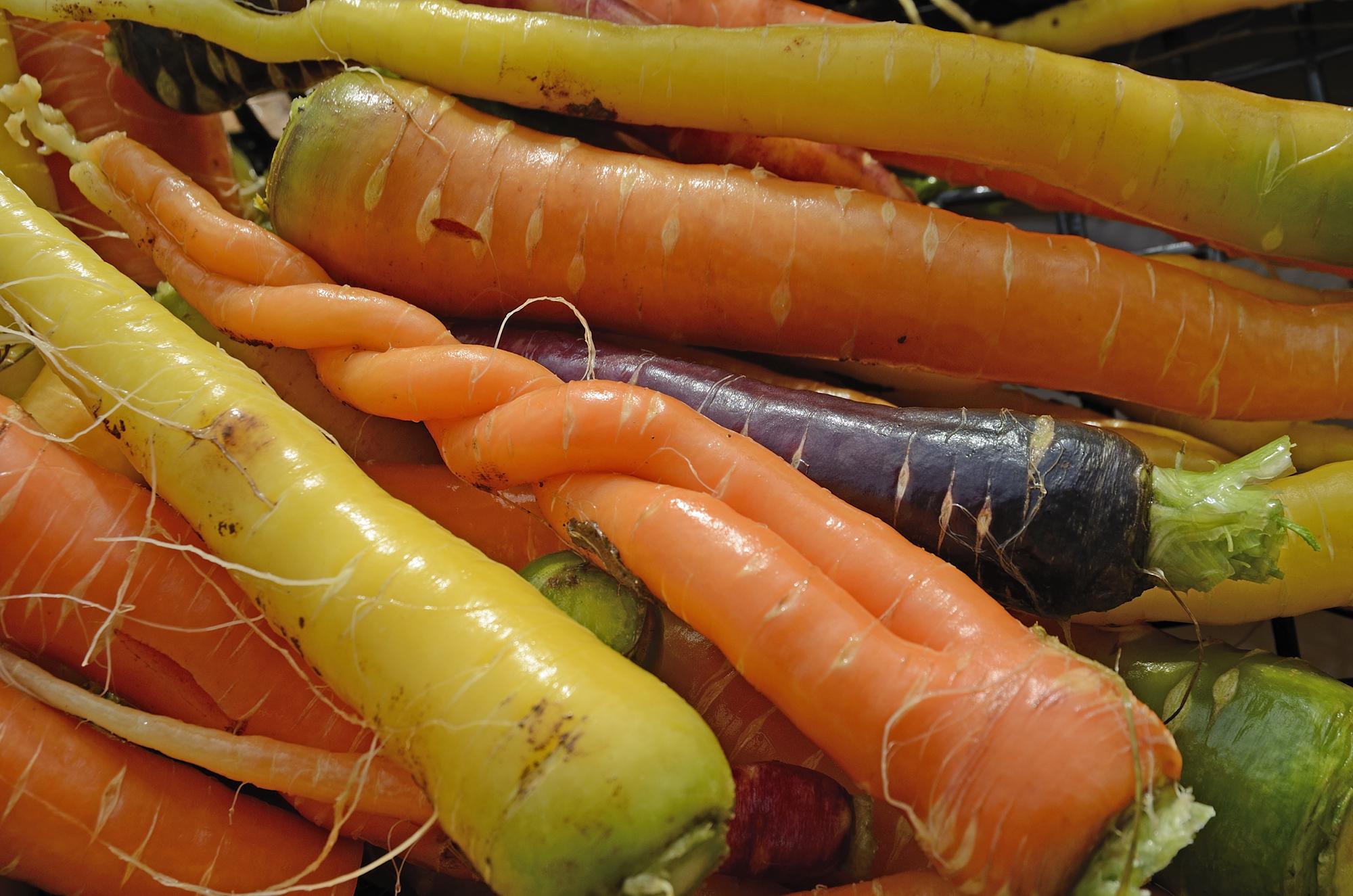 Non una carota qualunque - Slow Food - Buono, Pulito e Giusto.