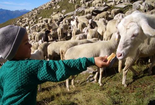 Capretti e agnelli, mangiamone meno, scegliamoli bene
