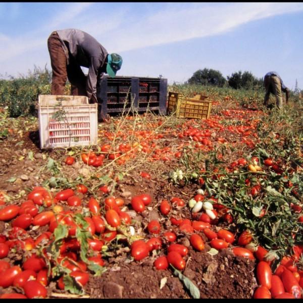 I migranti tra agricoltura e schiavitù: quali sono le responsabilità?