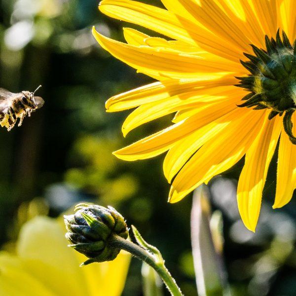 Sapete che cosa c'è nel vostro miele?
