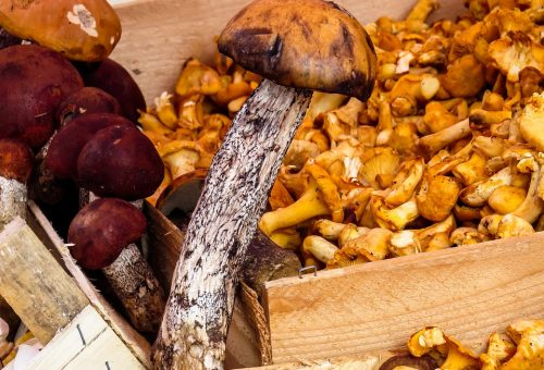 Funghi, occhio alla provenienza