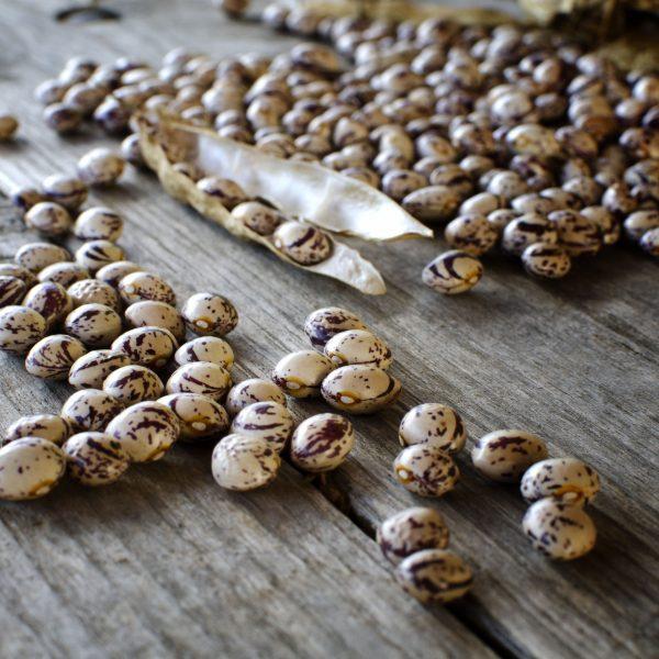 Il seme è vita, storia e sovranità alimentare: salviamo la biodiversità, non brevettiamola
