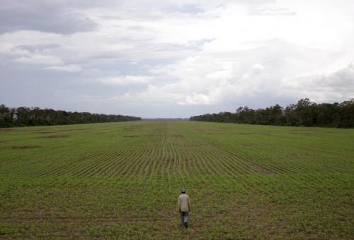 La fabbrica di soia: anche Papa Francesco denuncia lo scempio della deforestazione
