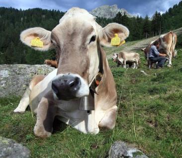 """Le """"mega latterie"""" possono risolvere la crisi del latte?"""
