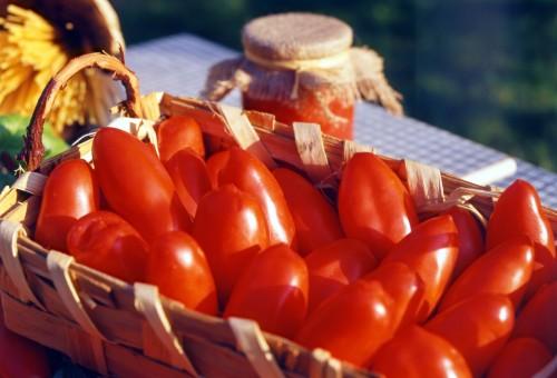 È il momento ideale per i migliori pomodori di stagione
