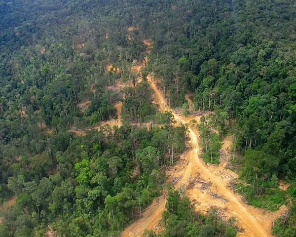 Deforestazione e agribusiness: la complicità dell'Europa