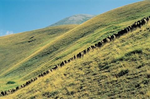 Marche_ pecorino monti sibillini