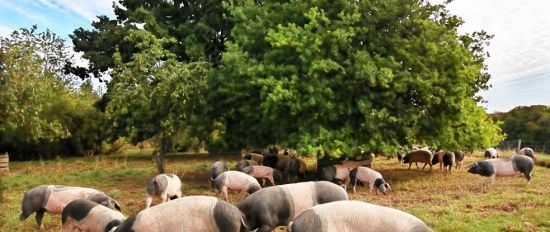 Benessere animale: allevatori di piccola scala vs grandi aziende