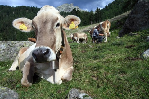 """In Uk la soluzione alla crisi del latte sono le """"mega latterie"""""""