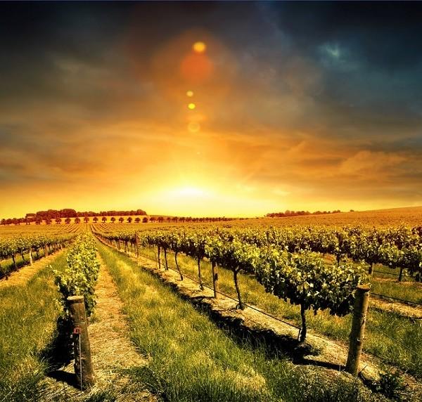 Clima impazzito, vino (buono) finito…