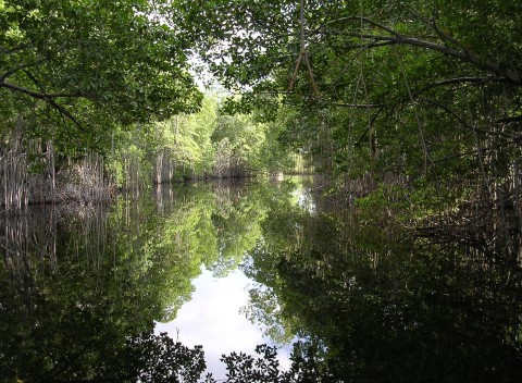 mangrovie bangladesh