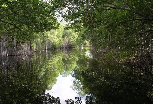 FOCUS CLIMA: La ricchezza nascosta delle mangrovie