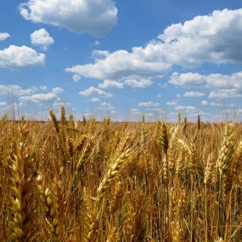 Il biologico può sfamare il mondo, parola di scienziato
