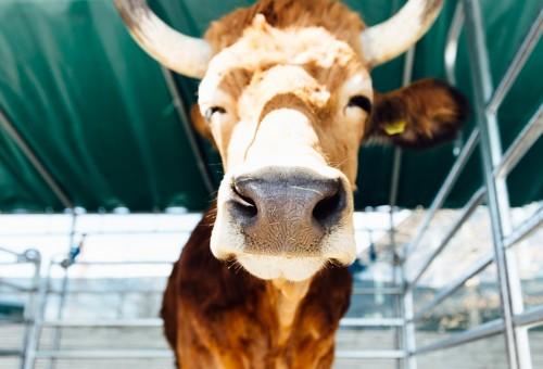 Quando acquistiamo la carne, possiamo scegliere che sistema di produzione sostenere