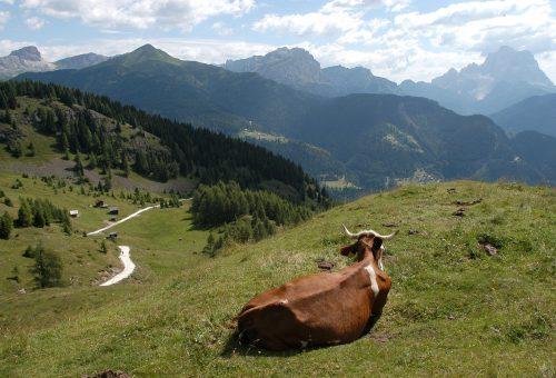 Allevamenti, per il pianeta non è tempo di vacche grasse
