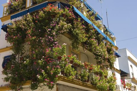 Balcony of a house highly decorated with flowers and hanging pots, Seville, Spain