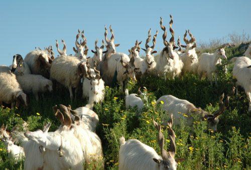 Dalle cinque libertà a una strategia sul benessere animale sempre più efficace